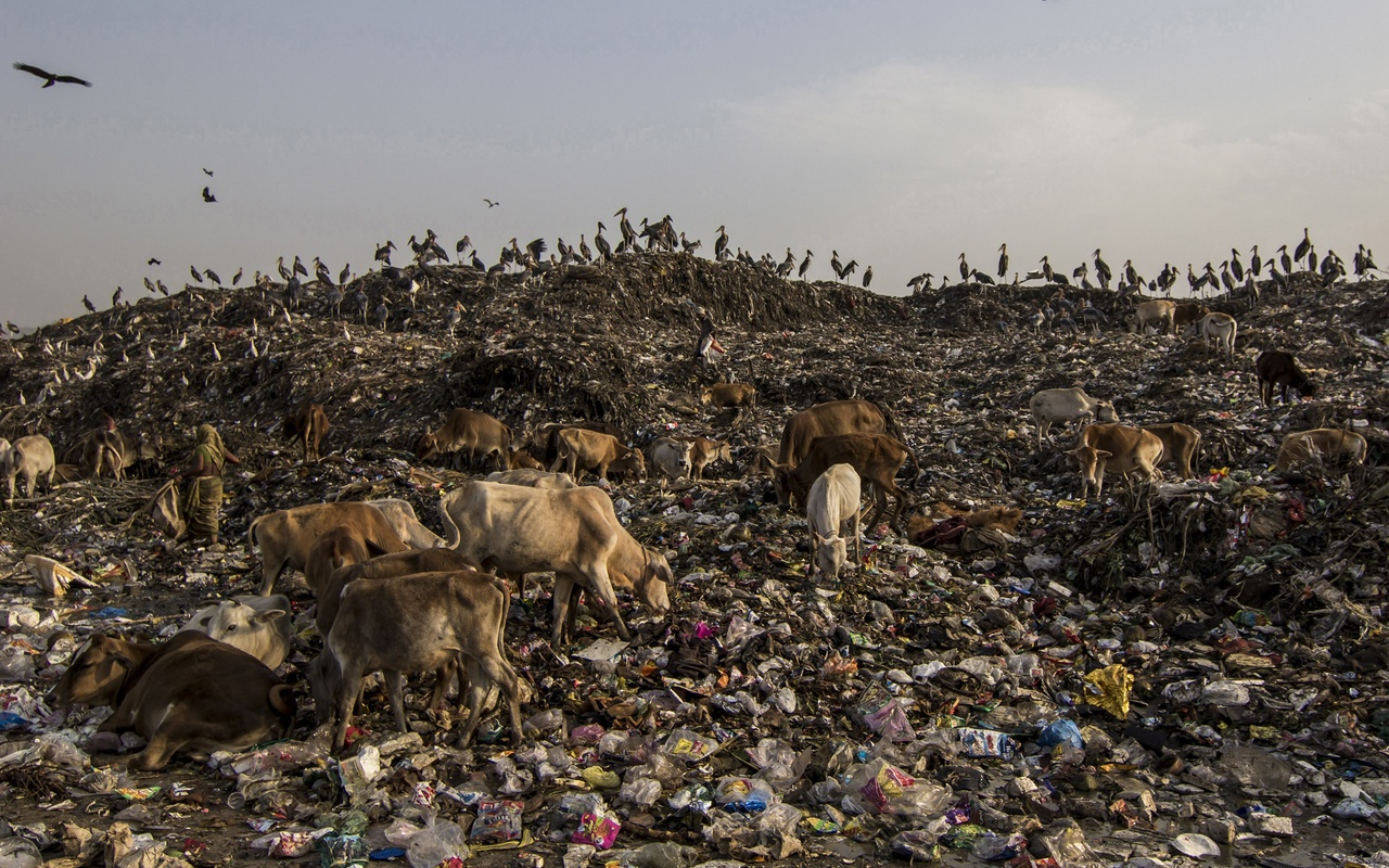 Waste dumping in India